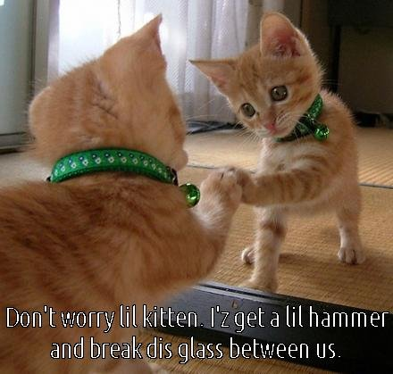 Dont worry lil kitten i s hammer and break dis glass bitwin us funny cat meme kitty