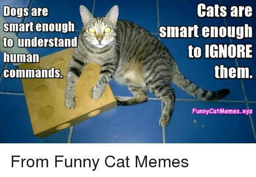 Memes 🤖 and Smart Dogs are smart enough to understand human mands