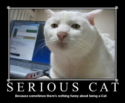 Serious Cat motivational poster