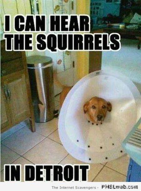 Dog Squirrel Meme