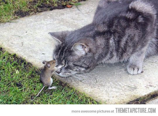 Mouse Kissing Cat Funny Picture