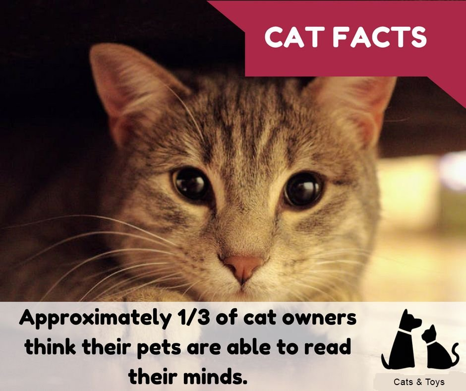 Fact about cat owners cats cat tattoo cat memes cats funny