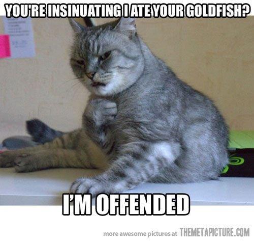 Tumblr Cat Pattern MEMES