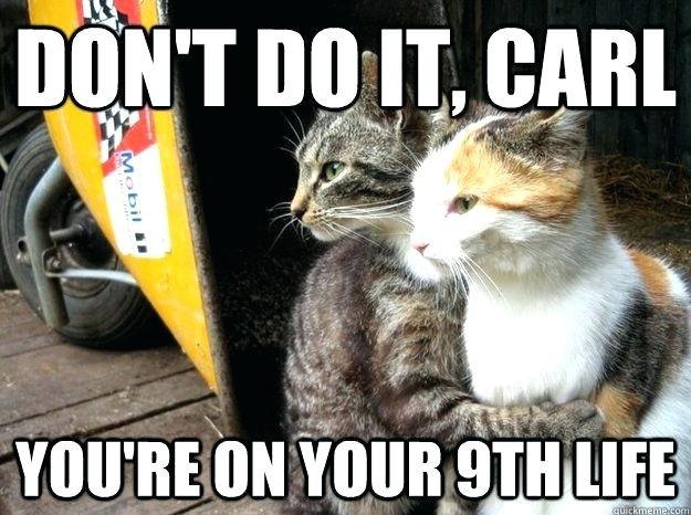 funny cat meme memes pictures funny cat meme