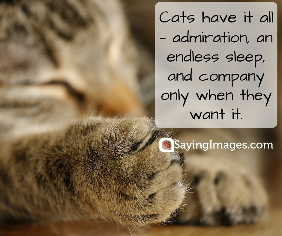 funny cat quote