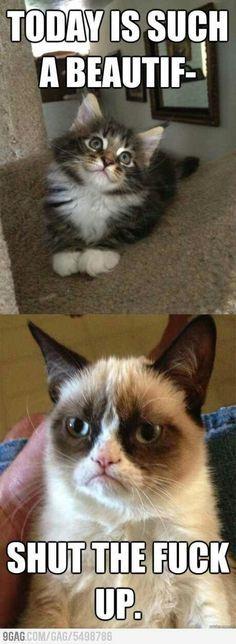 stfu grumpy cat humor funny Obama is a socialist