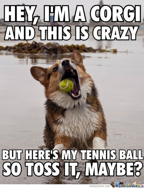 Funny Corgi Corgi Funny Corgi Dog