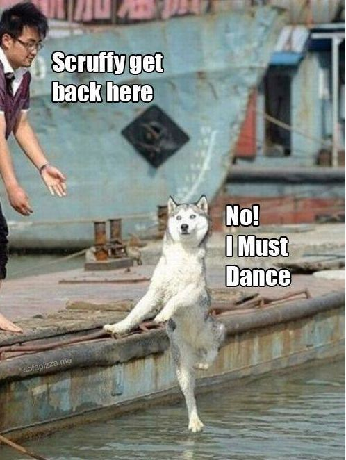 """I am hearing the dog say """"NO I must dance"""" in a British accent in my head and cracking tf up"""