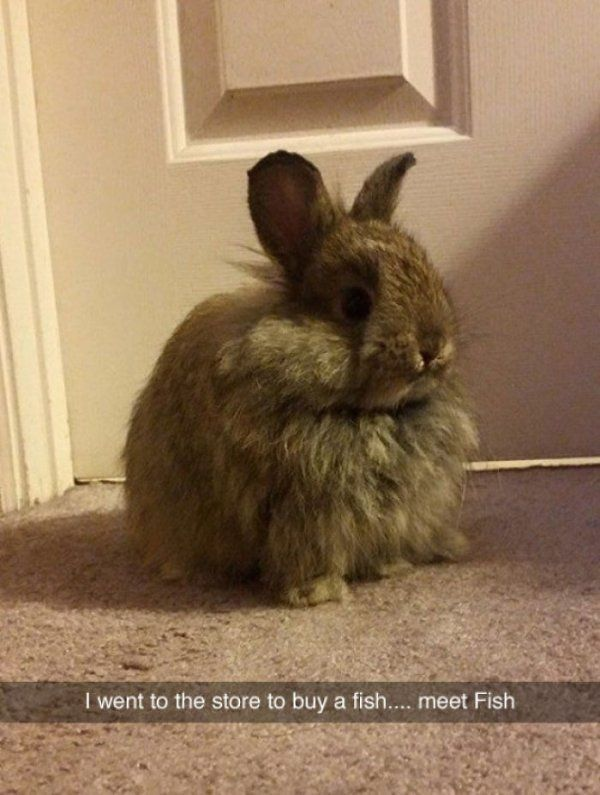 36 The Greatest Animal Snapchats Ever Snapped