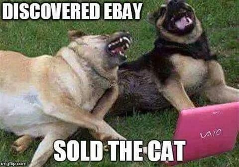 funny dog and cat meme