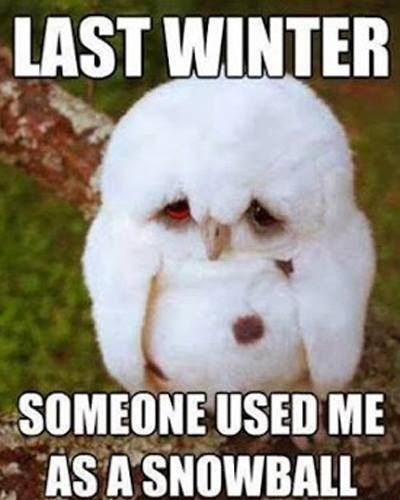 Owl snow ball Cute Animal Quotes Funny Humor Quotes Lol Quotes