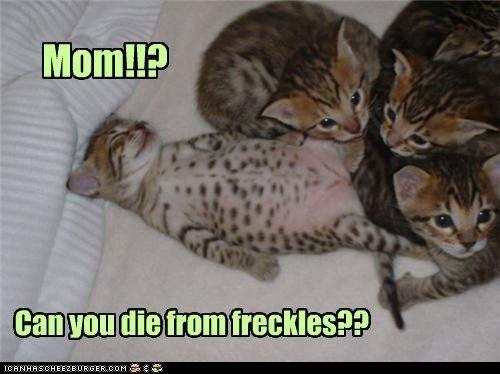 freckles kitten sleeping funny