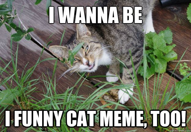 I wanna be i funny cat meme too