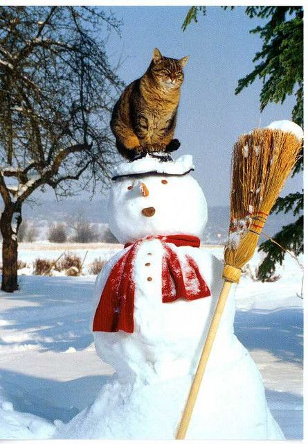 My Favorite Animal Postcards Cats Cat on a Snowman with Broom Printed in Germany but postmarked from the Netherlands 2011