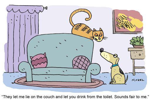 Cat toon