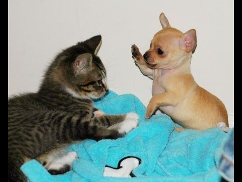 Dog vs Cat Fight Cat and Dog Funny Fight pilation