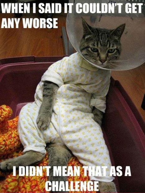 Cute Funny Cats Memes