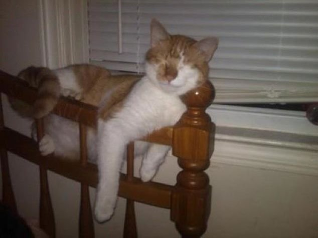 Cats Who Fell Asleep In Weird Places – 27