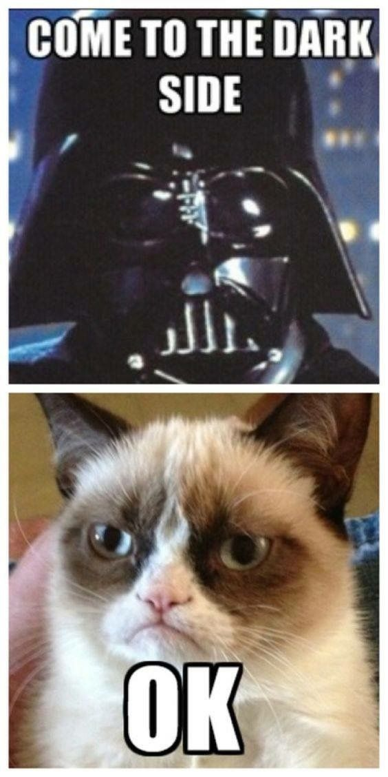Star Wars Humor Funny Star Wars Quotes Funny Cat Quotes Funniest Quotes