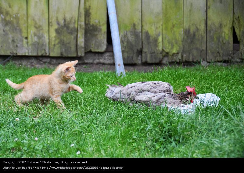 cat nature plant summer green red animal environment funny photocase stock photo large