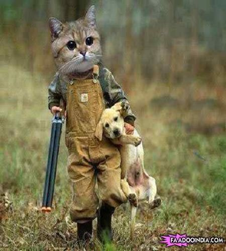 funny cats free images