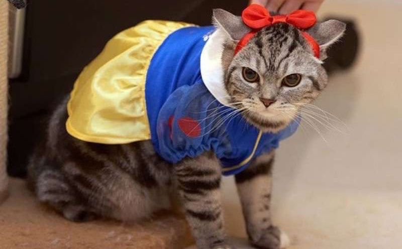 Watch the Inspirational Funny Cat Pictures In Costumes