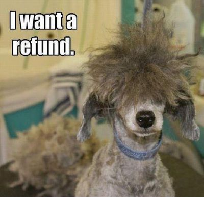 20 Hilarious Pet Grooming Fails