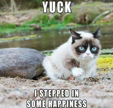 20 The Funniest Grumpy Cat Memes