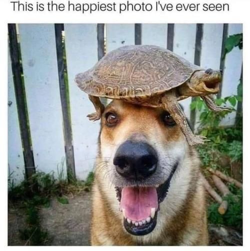 30 minute memes I cant tell whos happier visit crazydiscostu