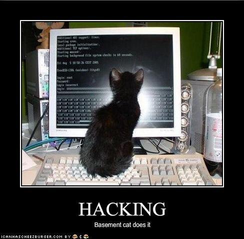 Memes fur cat hacked funnyaccount funnypictures 488x477 Memes fur cat hacked funnyaccount funnypictures