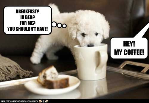 Animal 38 Very Funny Puppy With Captions Very Funny Puppy With Captions
