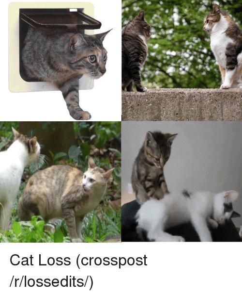 Dank Memes Cat and Loss