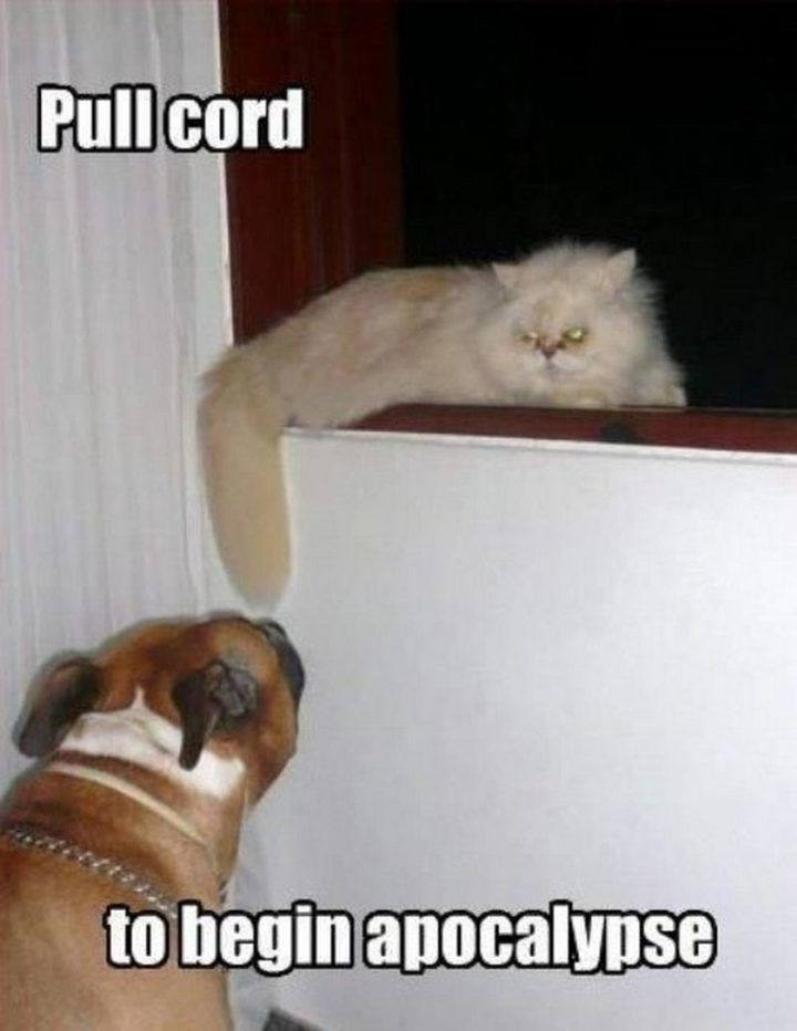 "55 Funny Cat Memes ""Pull cord to begin apocalypse """