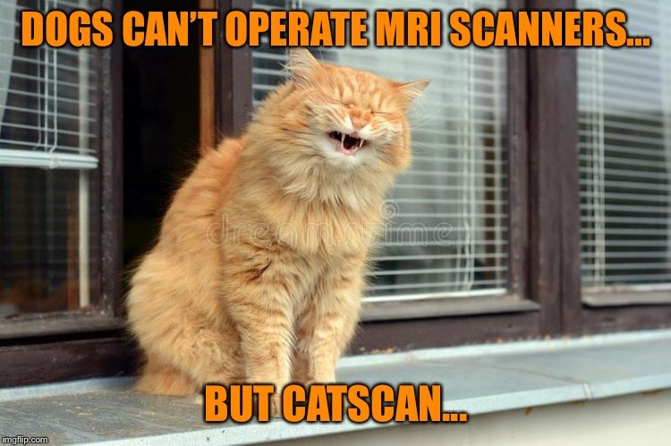 Watch the Lovely Funny Cat Scan Memes