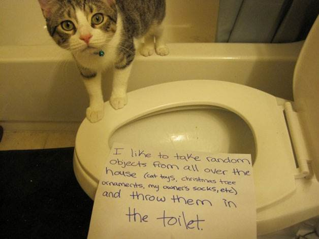 Watch the Lovely Funny Cat Shaming Memes