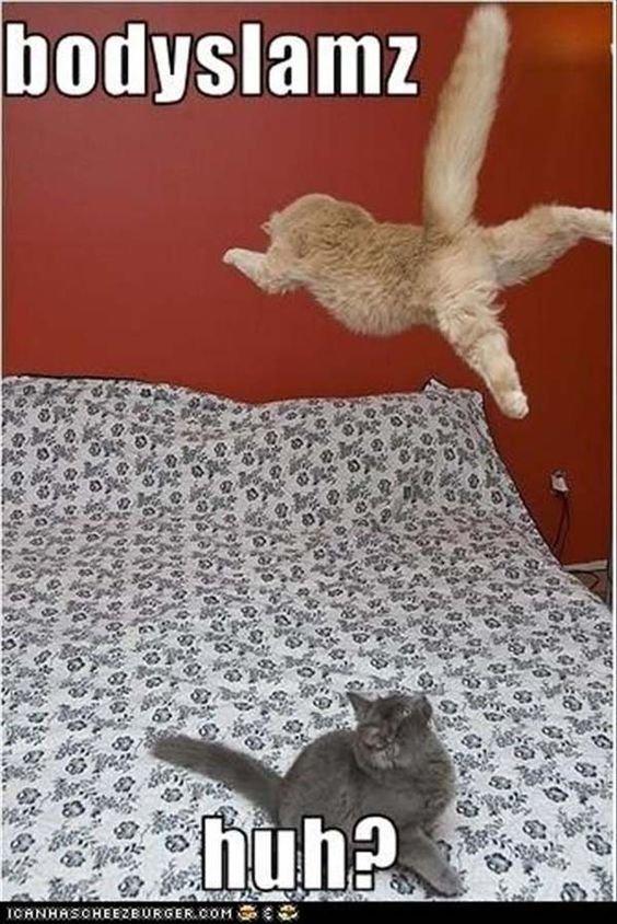 Top 27 Hilarious Cat funny cats cats humor
