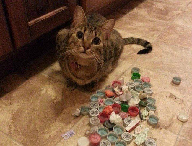 funny cat bottle tops