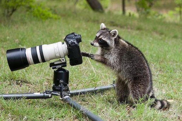 17 Funny Animals Appear to Be Taking s with Cameras Good morning