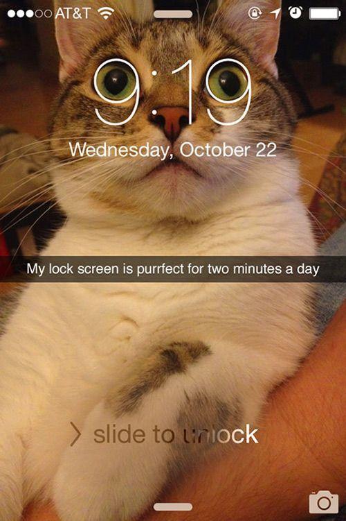 Cat Memes Funny Memes Hilarious It s Funny