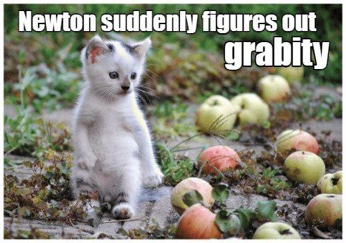 Funny cat meme of kitten named Newton learning about gravity