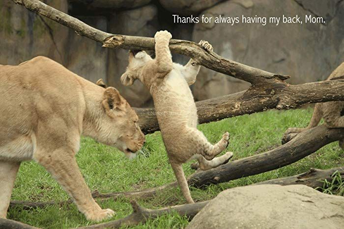 Thank you Gift for Mom Unframed graphic Print of Lions Available with or without Quote Encouragement