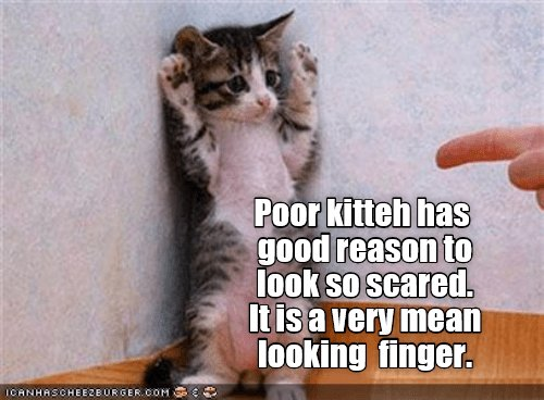kitten finger scared mean look caption