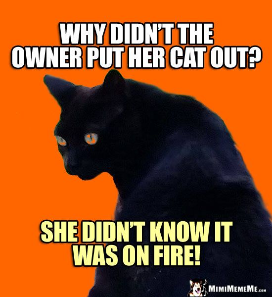Black Cat Humor Why didn t the owner put her cat out She