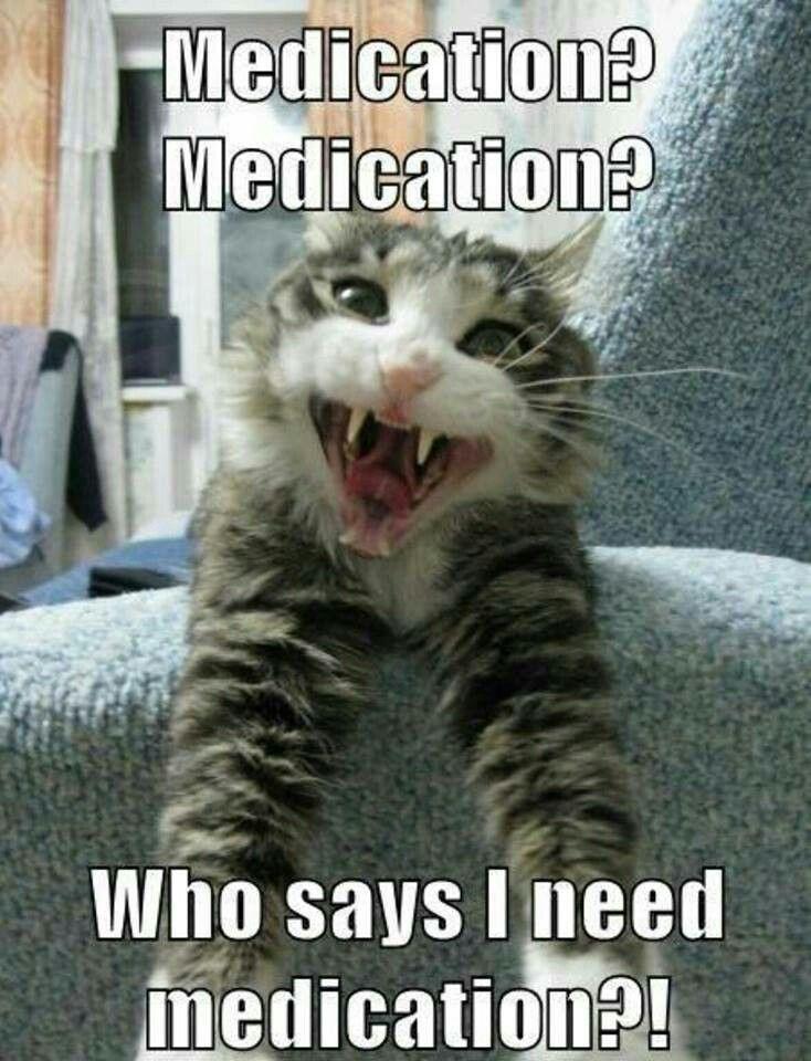 Funny Cat Cats OMG