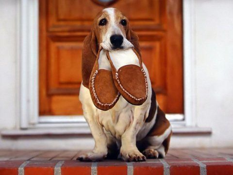 Watch the Luxury Funny Hound Dog Pictures