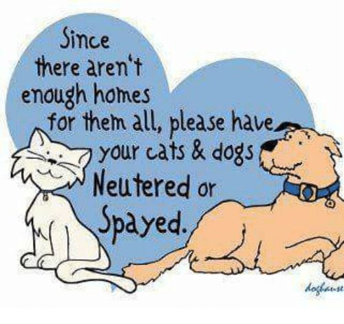 Memes 🤖 and Neuter Since there aren t enough homes for them all please have your cats & dogs Neutered or Spayed