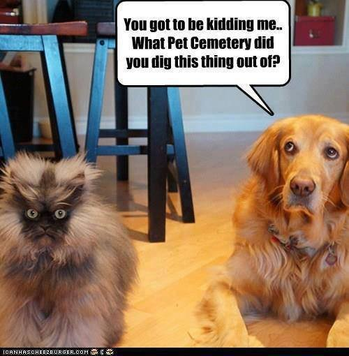 Funny dog and cat picture 1