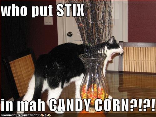 Watch the Luxury Halloween Cat Pictures Funny