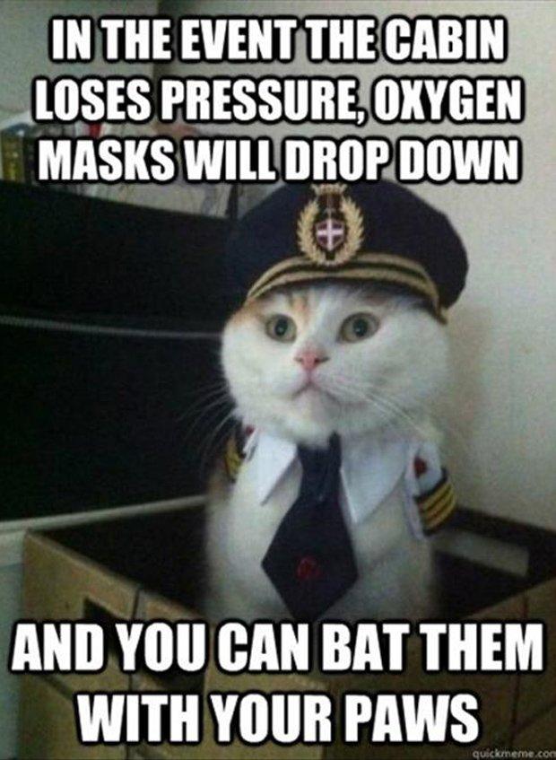 funny cats airline pilot meme Dump A Day