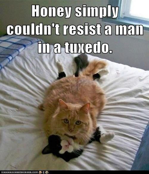 tuxedo irresistible